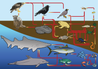 A terrestrial and aquatic food web